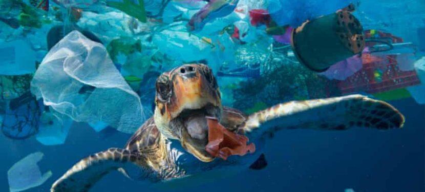 Takeaway food litter dominates ocean plastic
